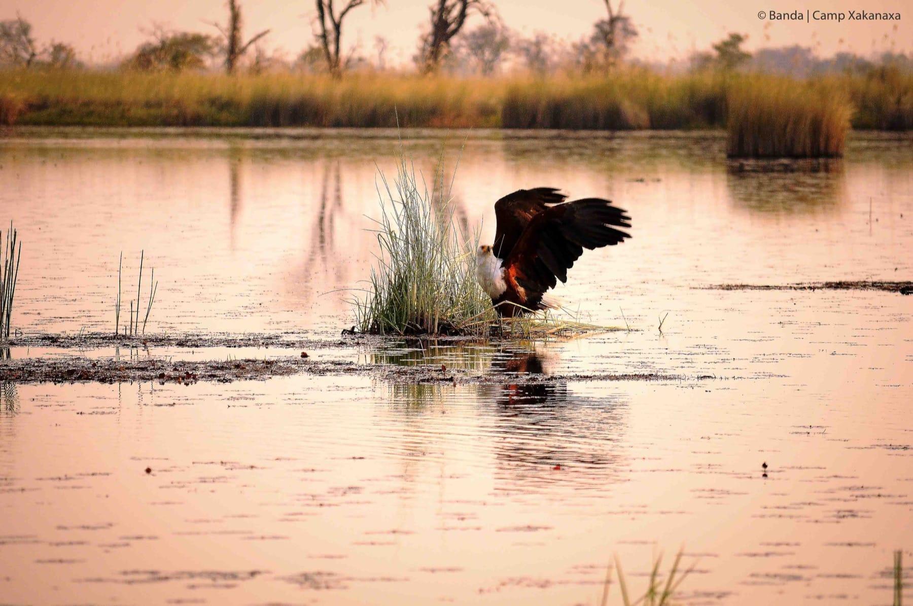 birding safari botswana