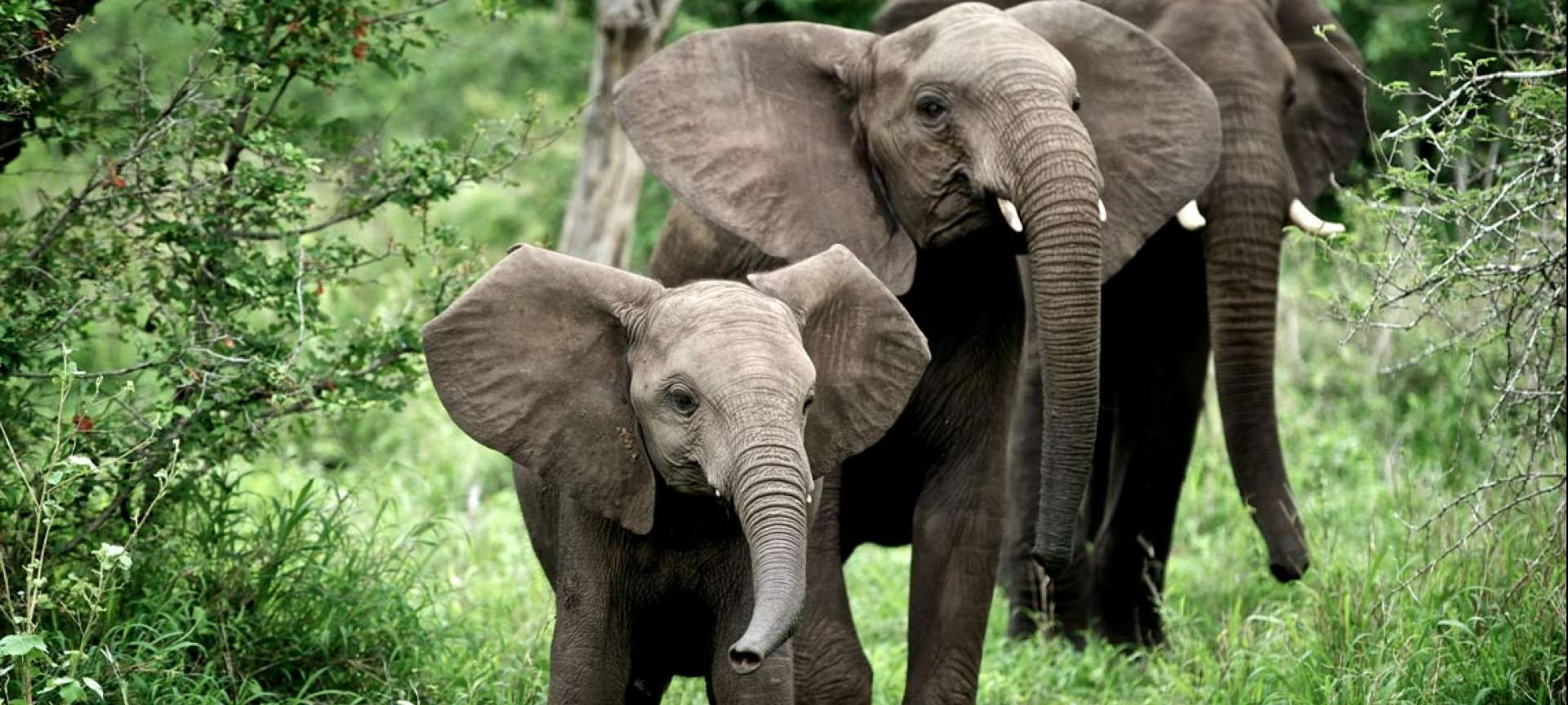 South Africa in April_Elephants