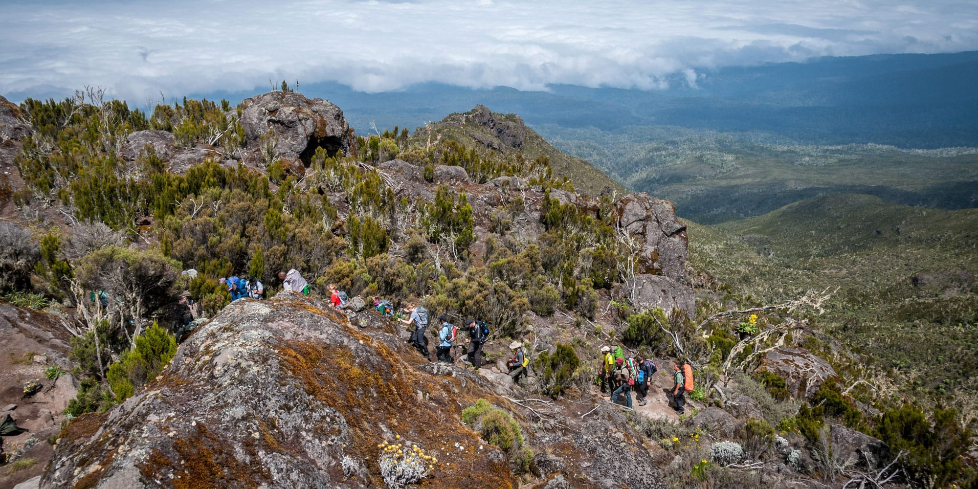 hiking through the afromontane landscape from the machame route
