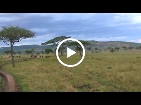 the-migration-at-moru-plains-and-between-kusini-and-ndutu