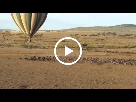 ballooning-over-the-migration-in-seronera