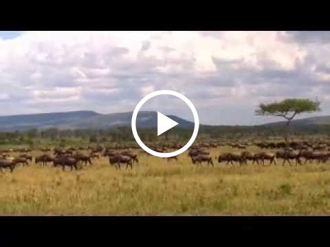 the-wildebeest-migration-close-to-ngong-hill