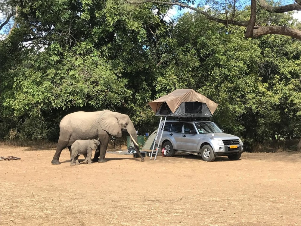 mana pools self drive safari