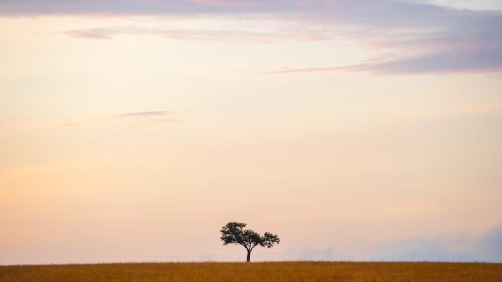 landscape masai mara