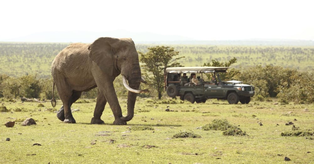 masai mara game drive elephant