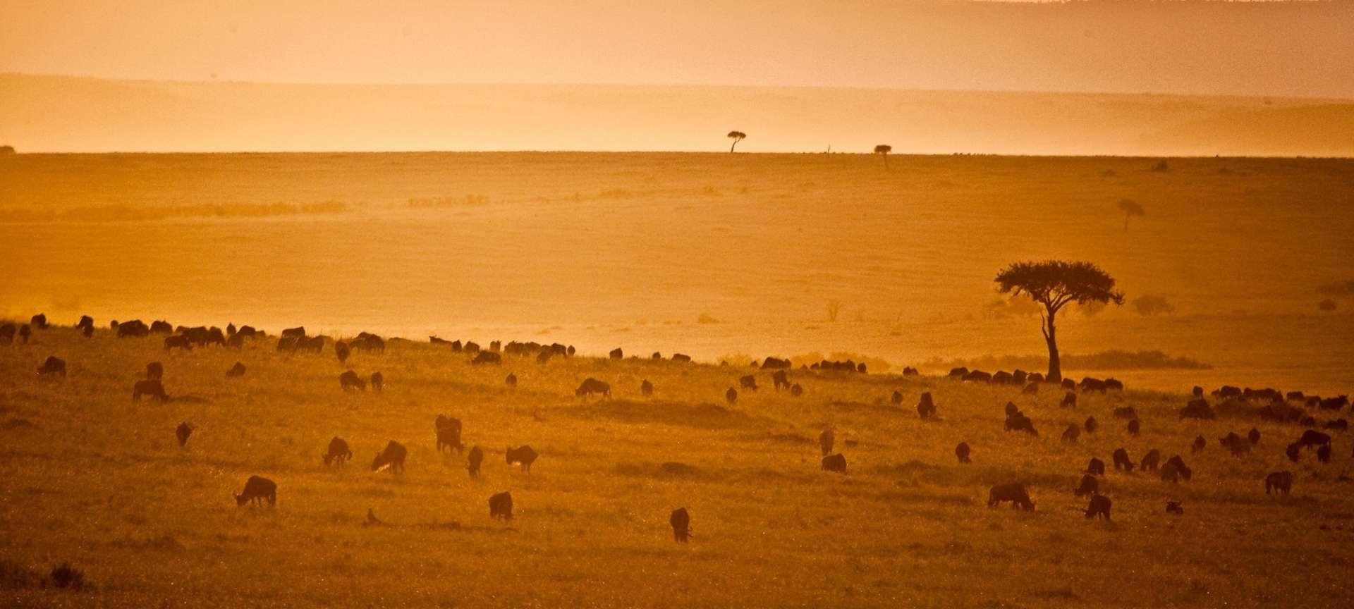 masai mara salas camp