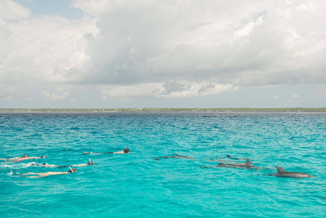 swimming with dolphins on a zanzibar holiday
