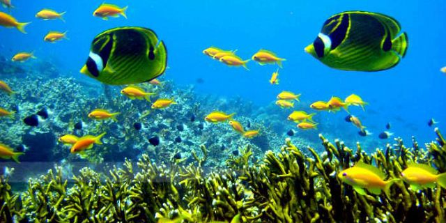 Marine life is rich in Mauritius