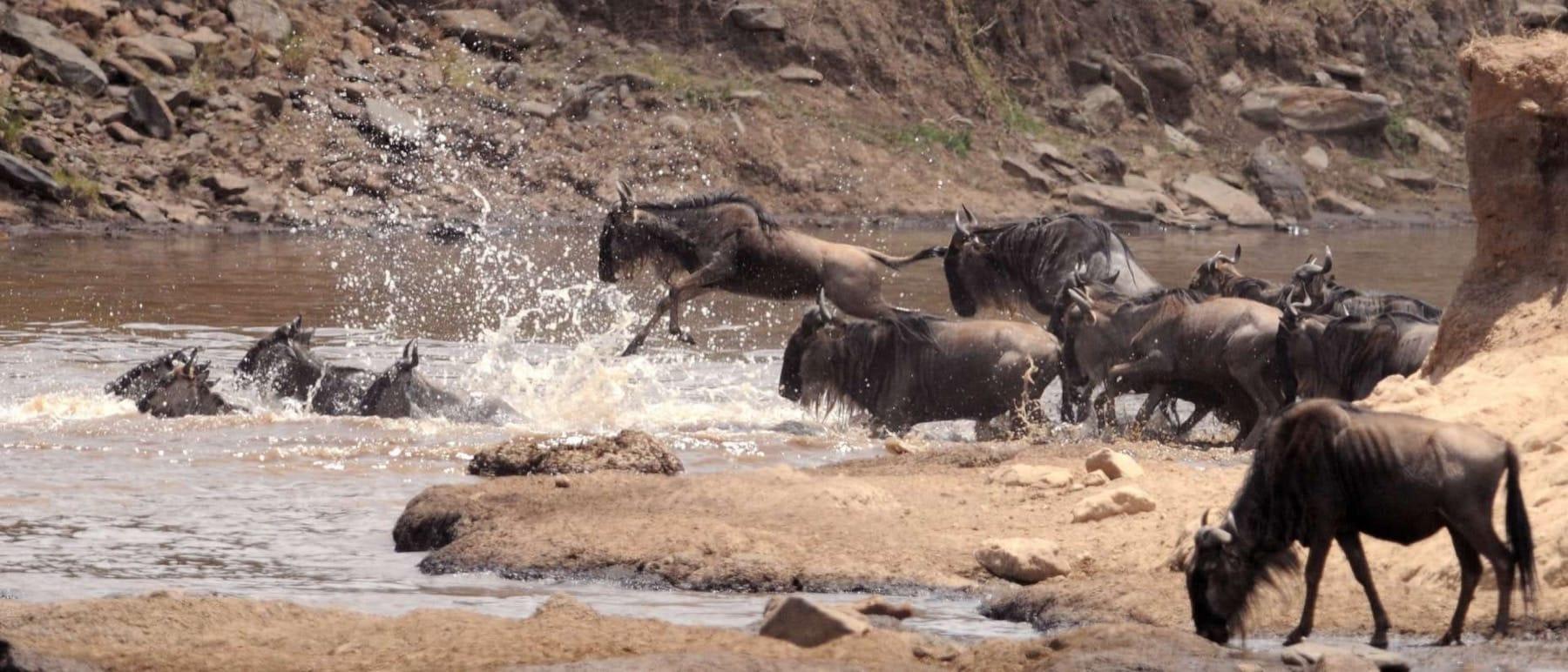 migration kenya