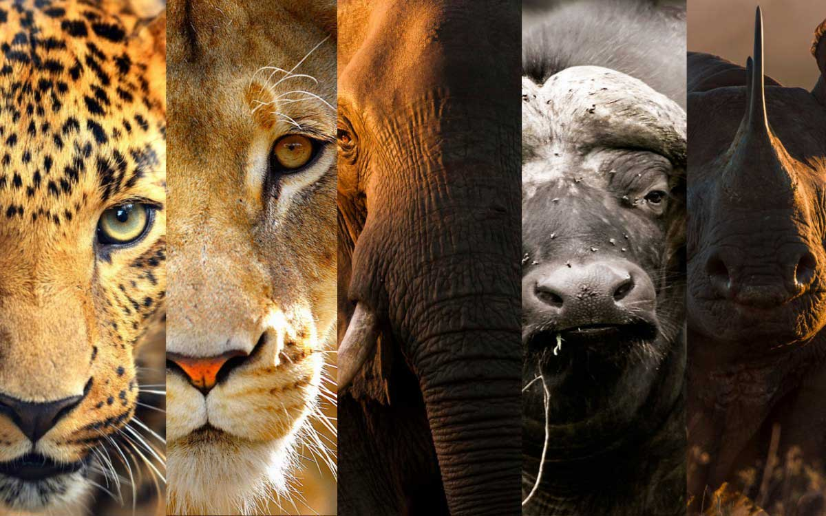 The Big Five, credit: The Pinsta