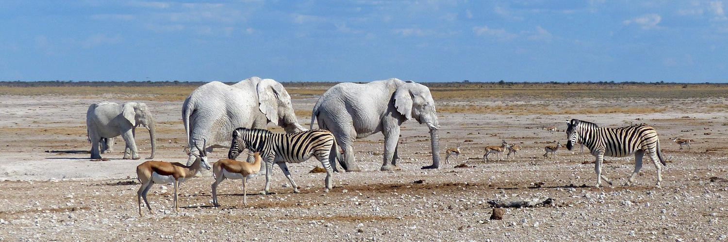 Etosha National Park is Namibia's flagship and is regarded as free from malaria in the dry months, credit: Info Namibia
