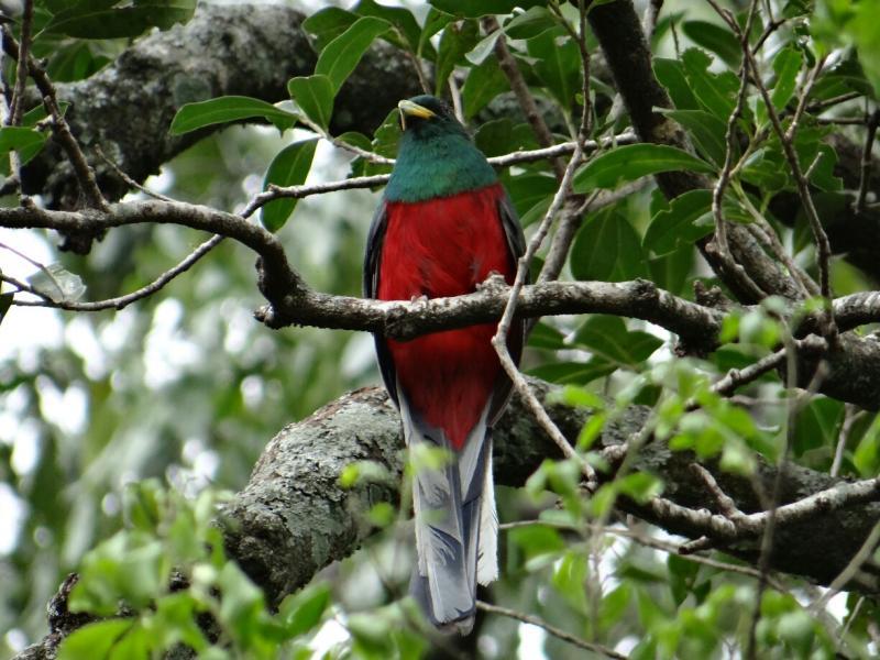 Birding safari holidays in South Africa_Narina Trogon