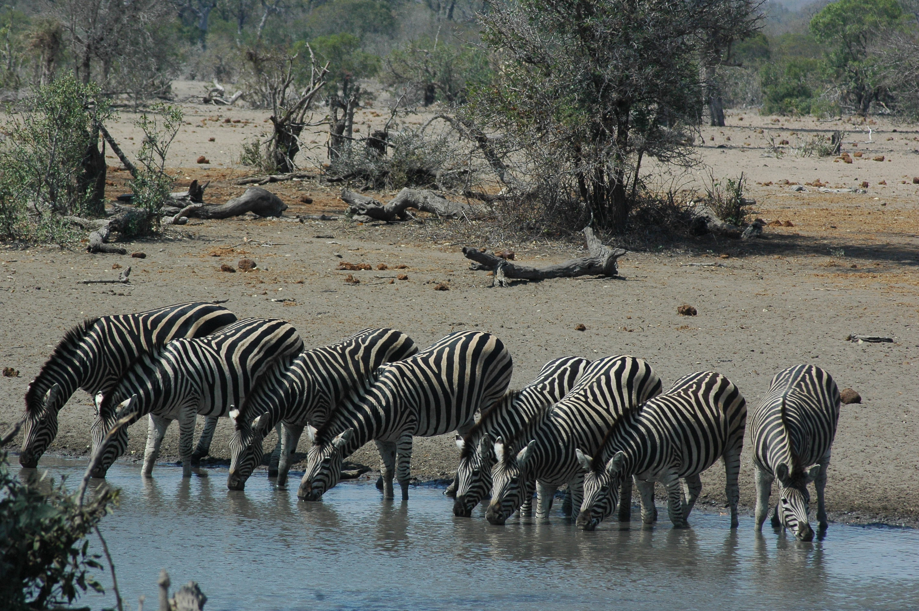 South Africa in October_Zebra_National Geographic