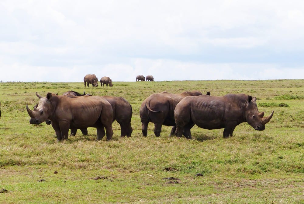 nguli rhino sanctuary