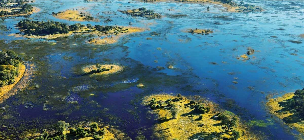 Okavango Delta supports at least 2000 species flora and fauna