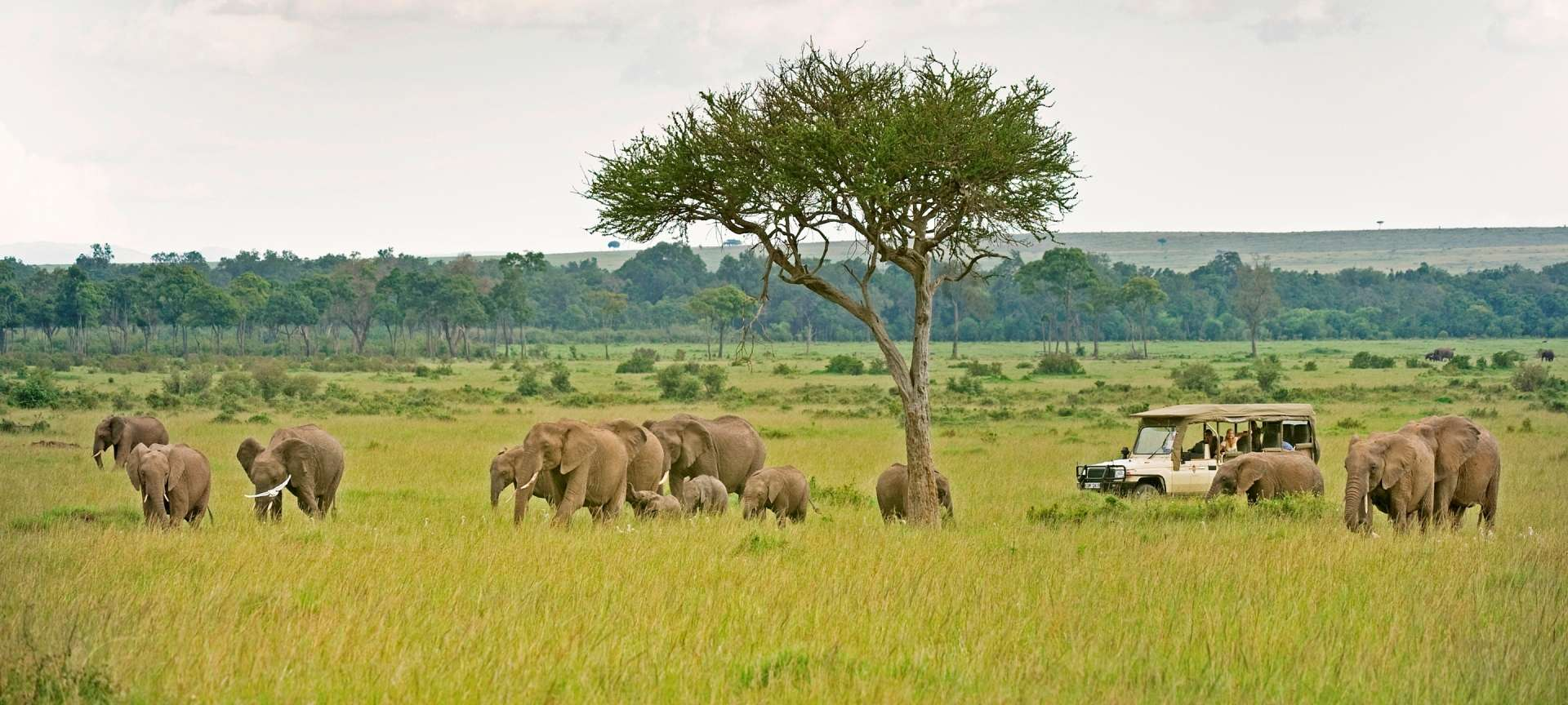 Game drive_Masai Mara_Sanctuary Olonana