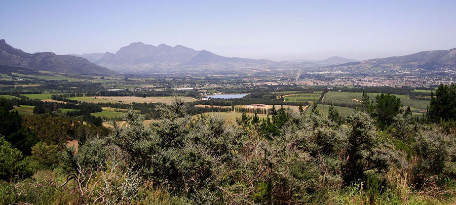 paarl in the cape winelands south africa safari