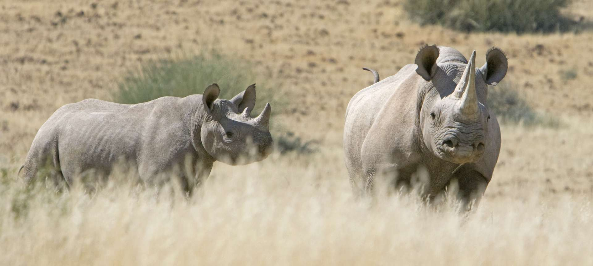 rhino in pilanesberg wildlife