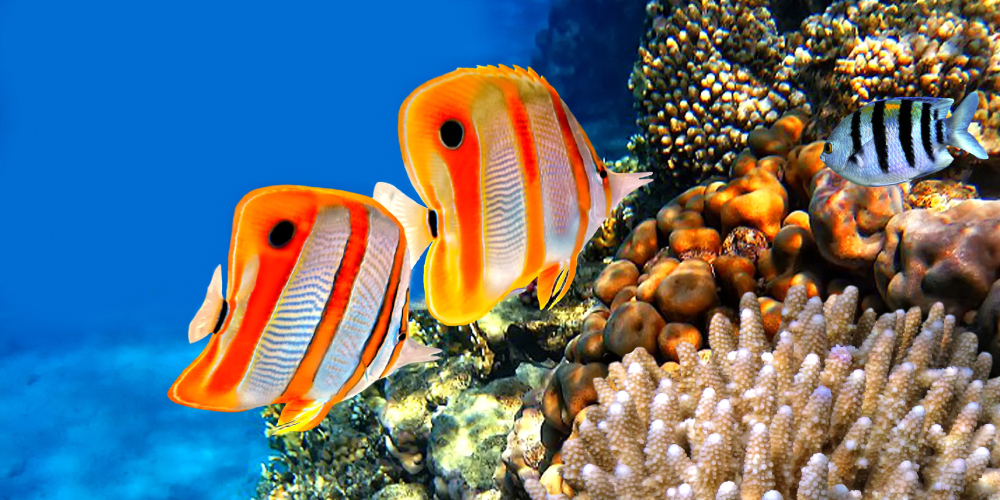 santa marie island coral reef mozambique diving holiday