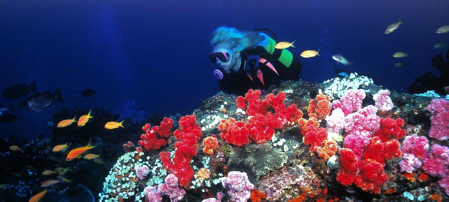 coral reef snorkelling