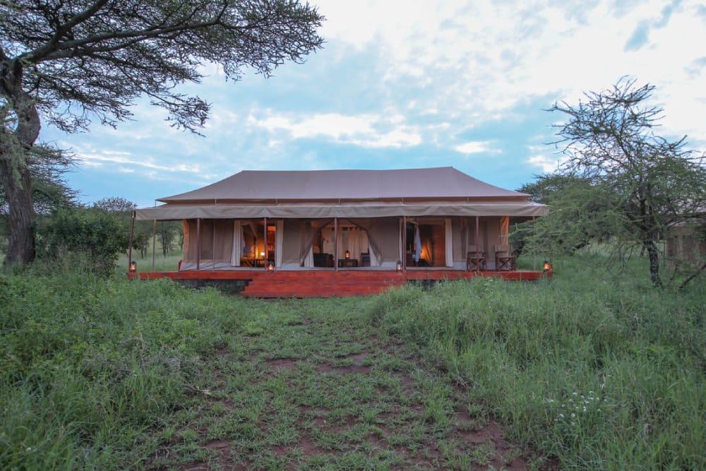 serengeti acacia camps seronera