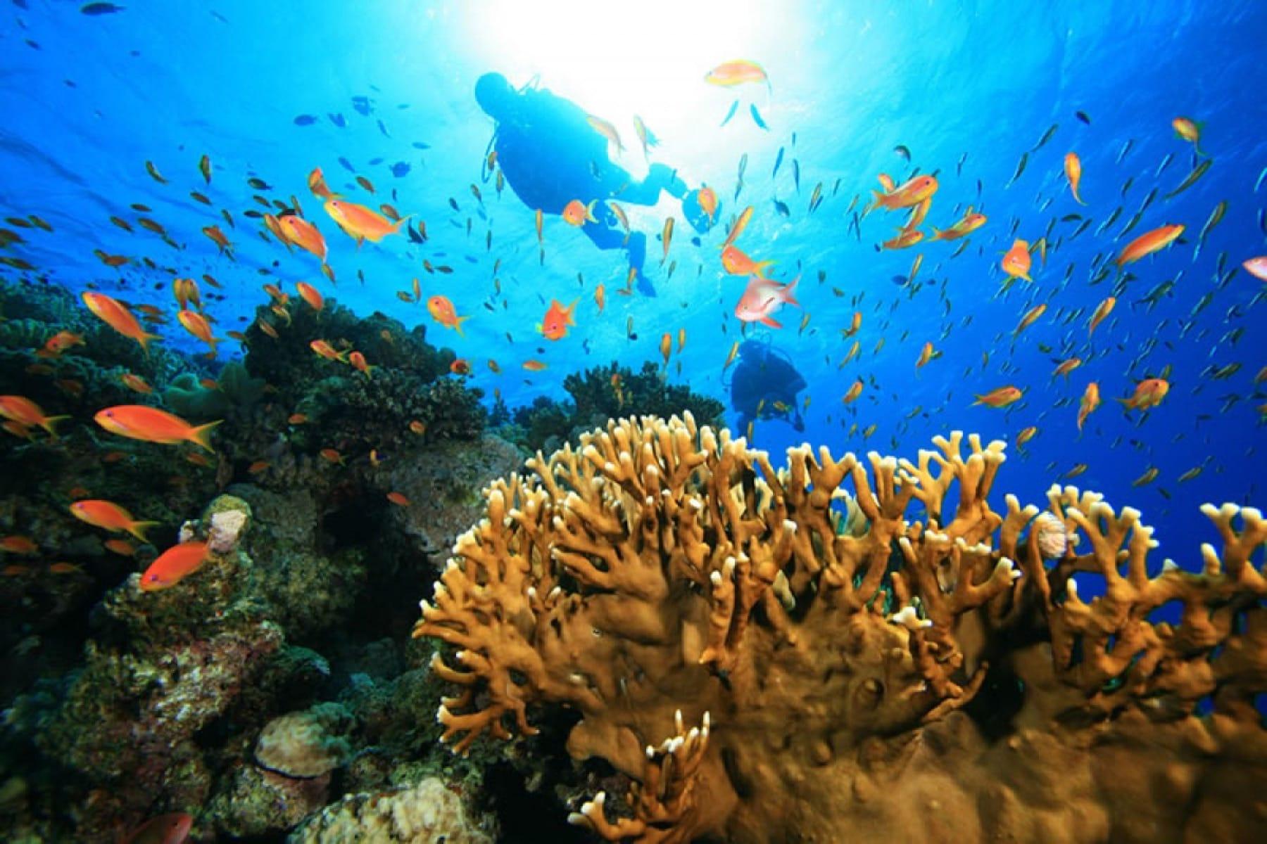 iSimangaliso Wetland Park_Reef