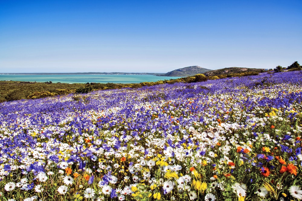 spring in langebaan on the west coast south africa holiday