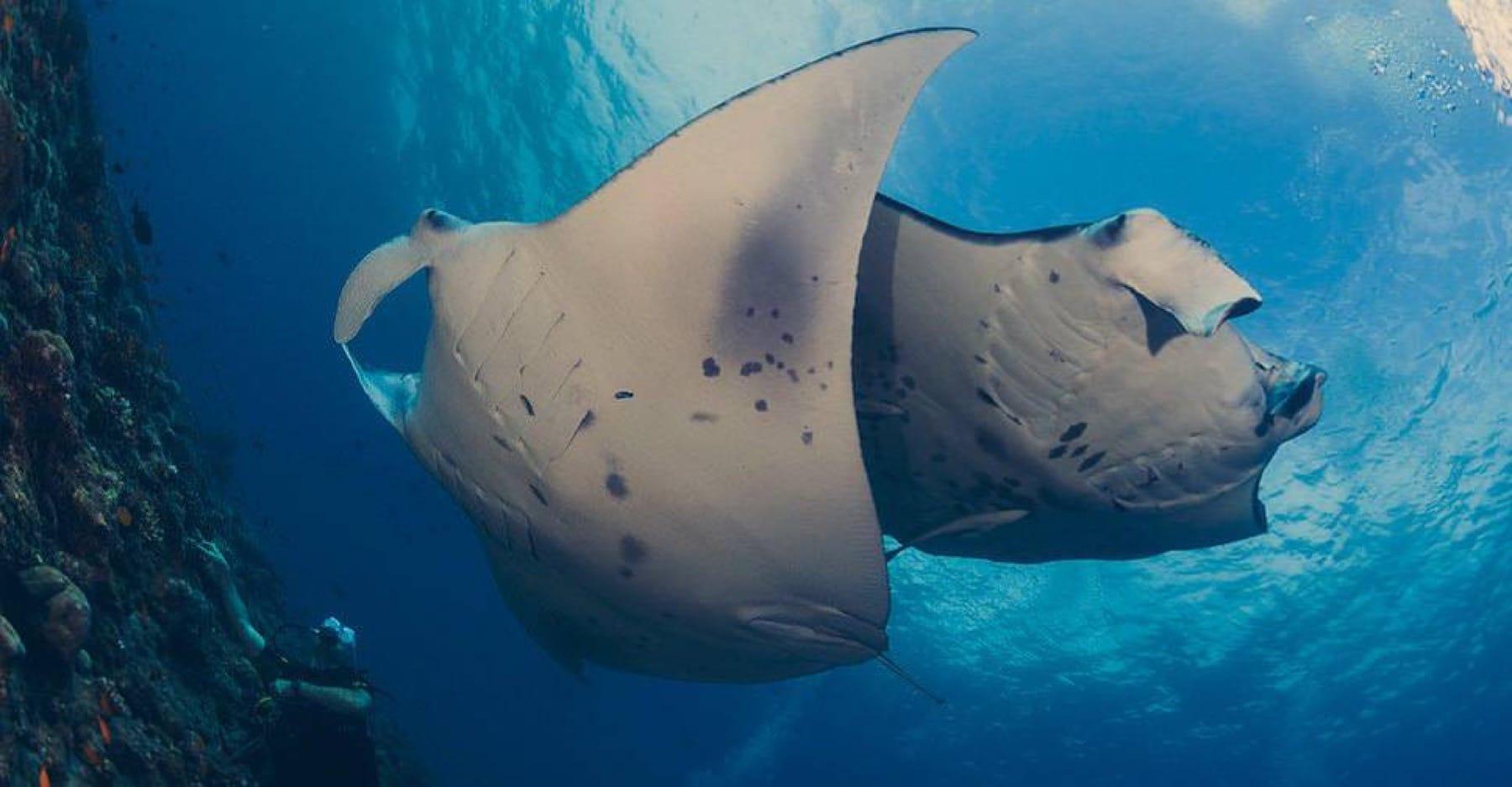 stingray marine life mozambique holiday