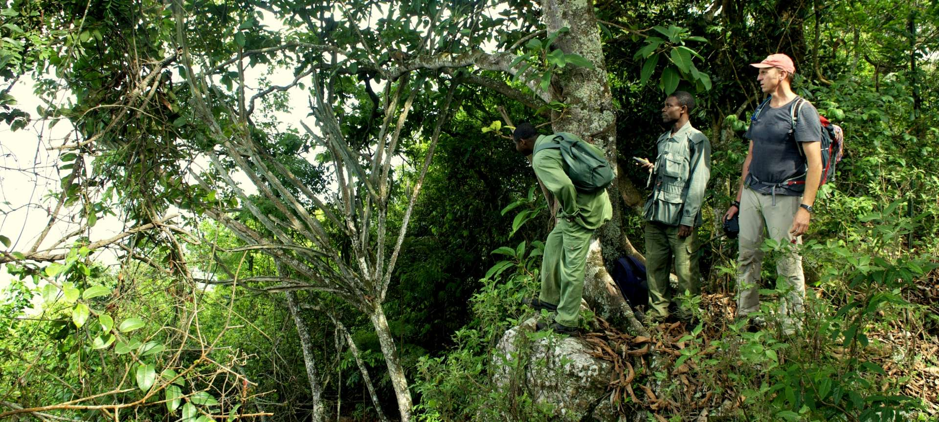 Hiking through Tanzania's indigenous forests