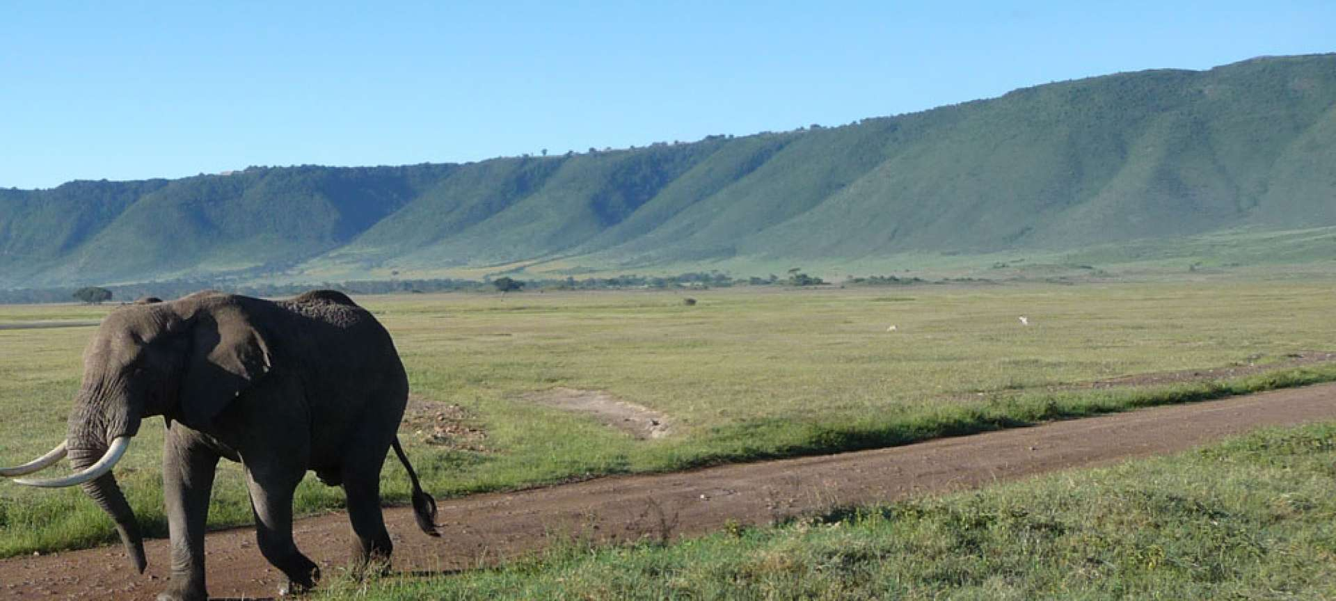 An elephant in Tanzania strikes an impressive contrast against the landscape