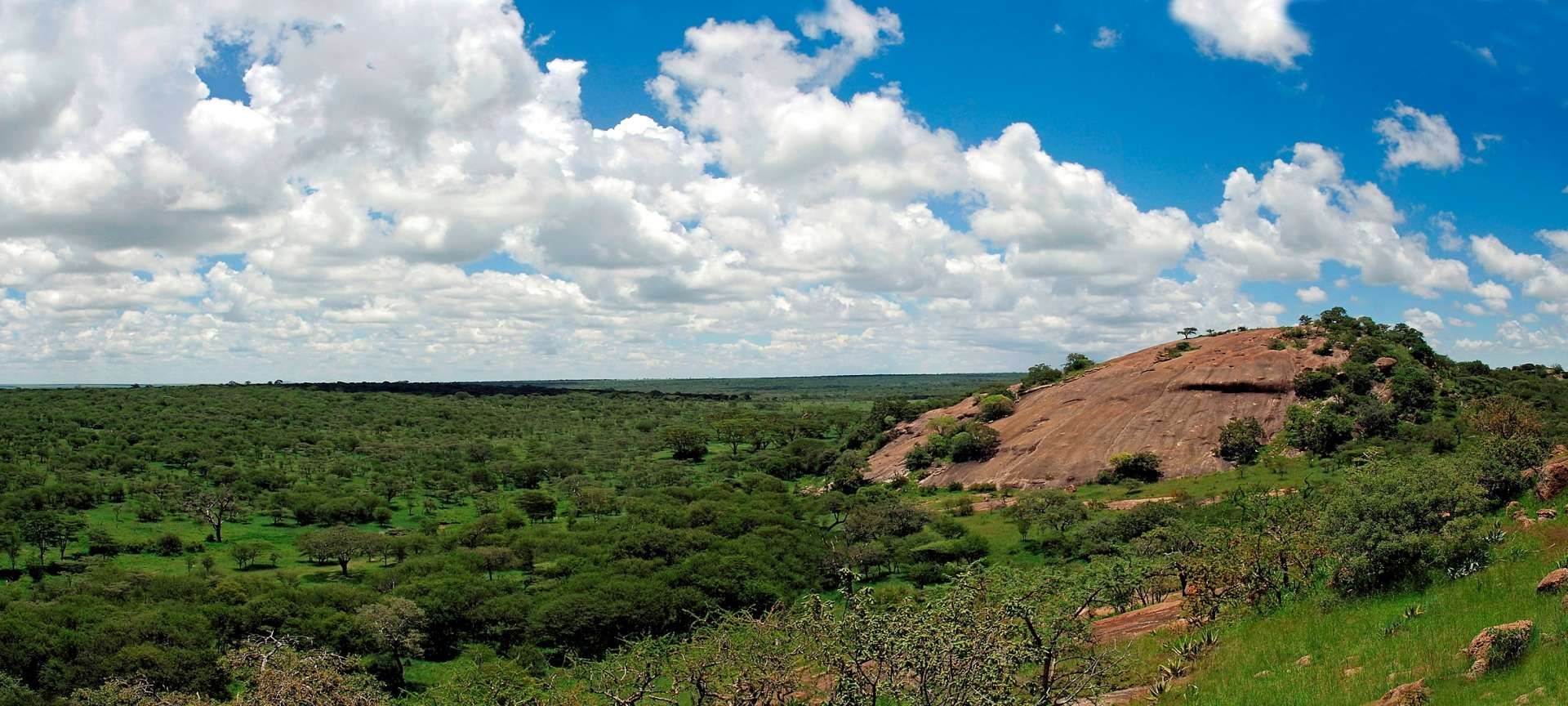 The Tanzanian landscape during the green. lush season