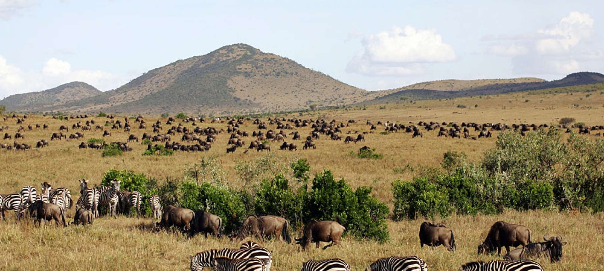 Tanzania in January is generally a busy time for the game parks