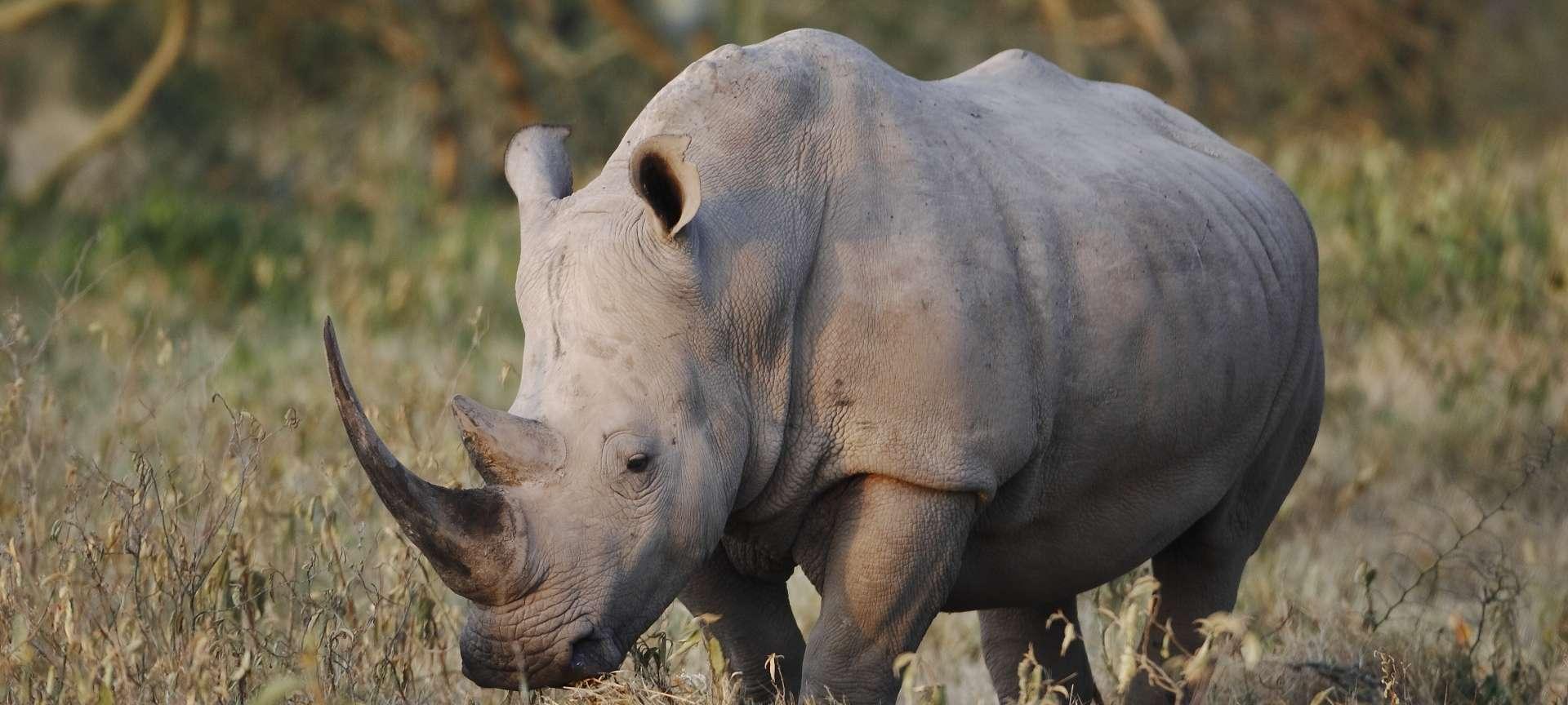 Rhino in the sweeping valley of Ngorongoro