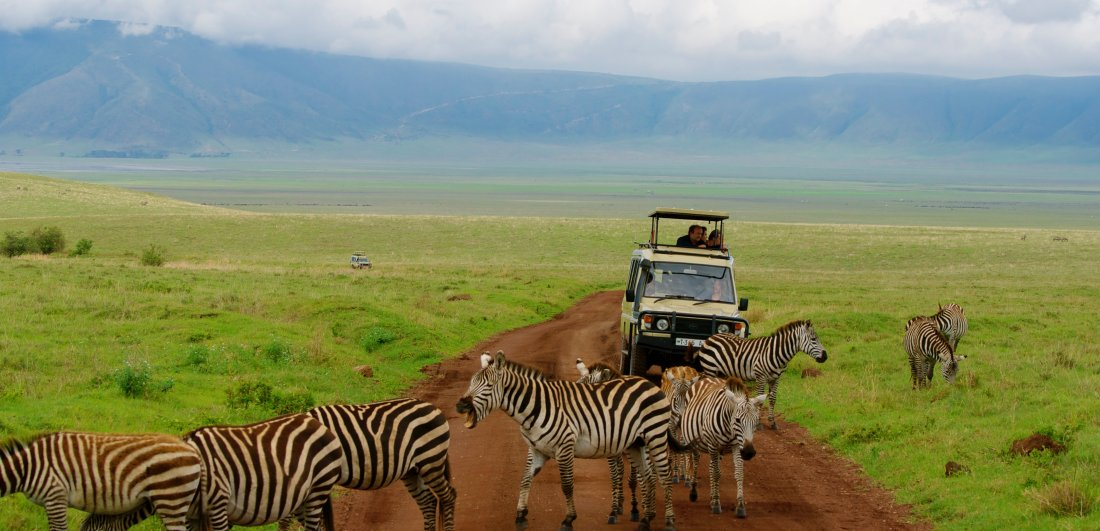 Ngorongoro Crater is famous for its prolific wildlife