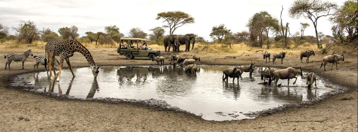 Wildlife at a waterhole in Tanzania