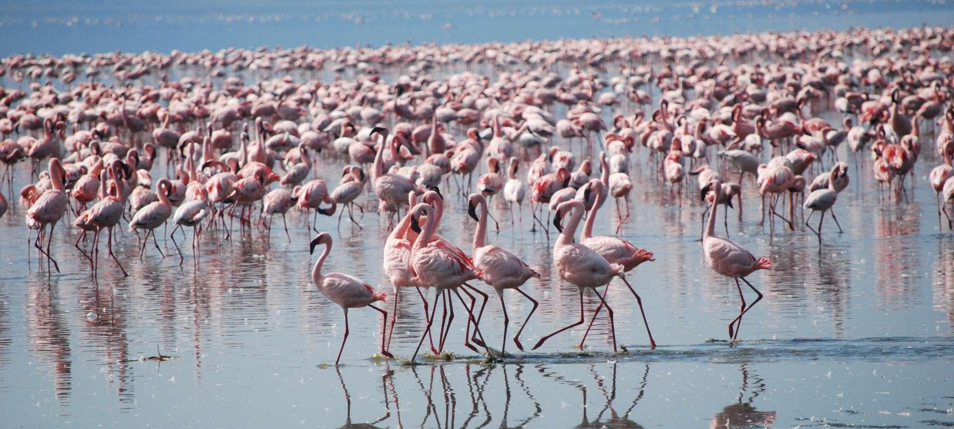 Flamingos make for amazing photographic subjects