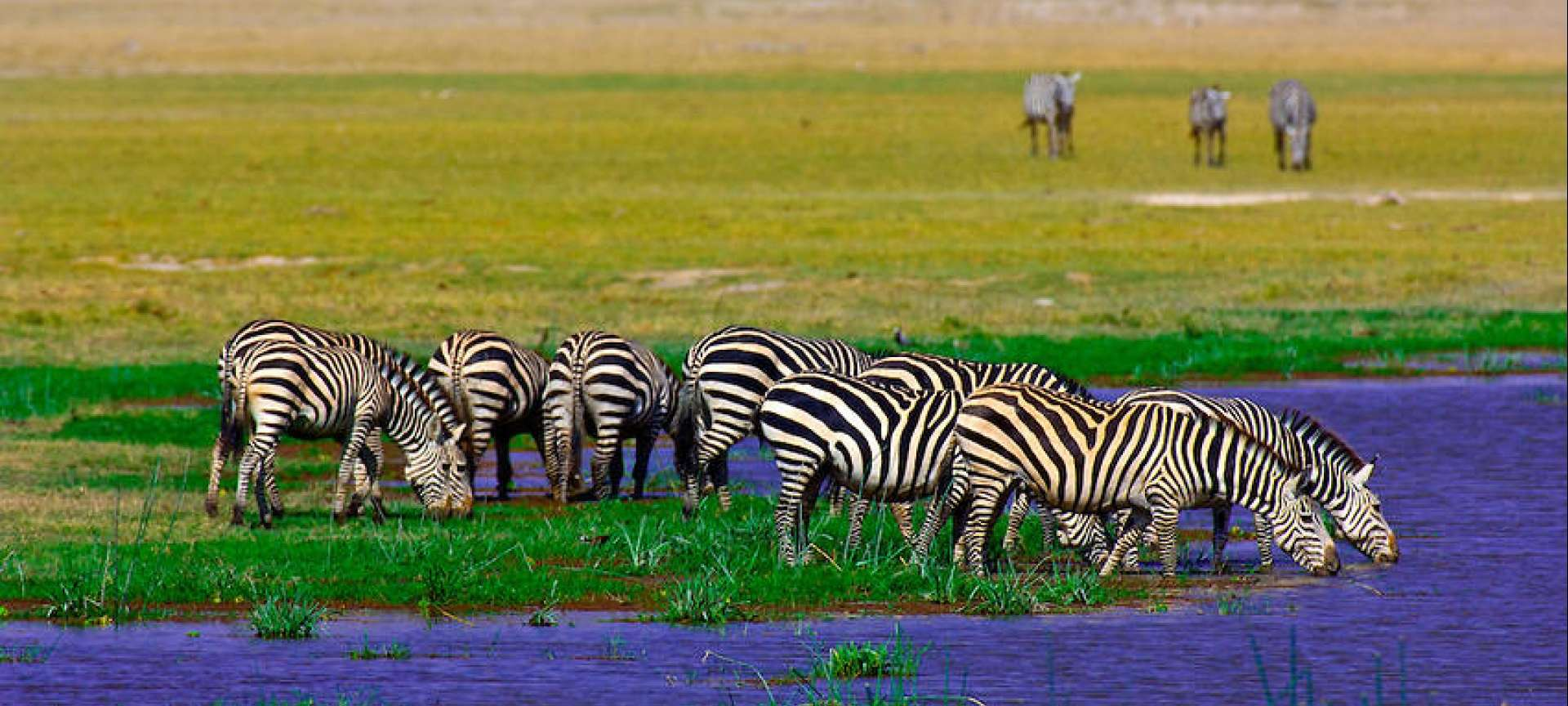Zebra always photograph so well against the backdrop of the African savannah