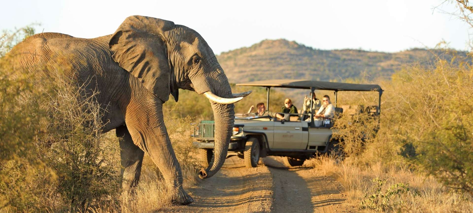 Ensure your safari guide is aware of any photo opportunities along the route