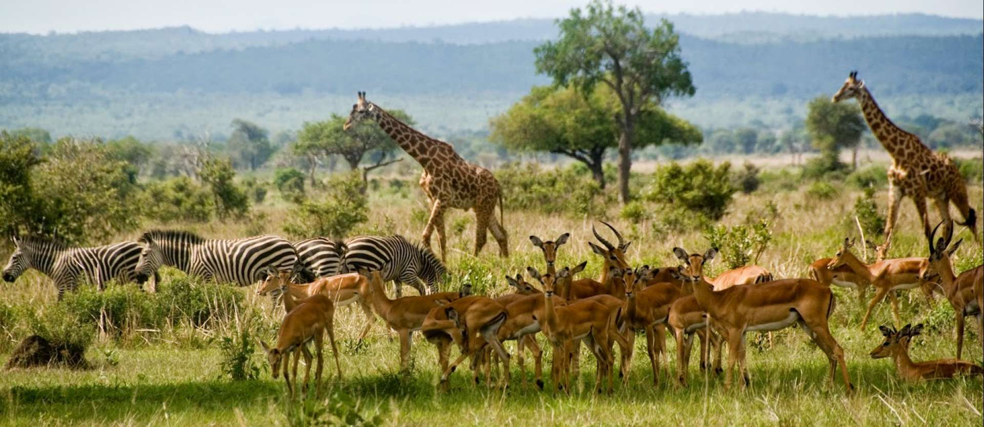 Ruaha is a special place to visit for many reasons