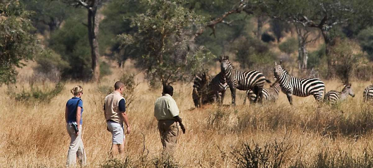 Walking safari in the Serengeti NP