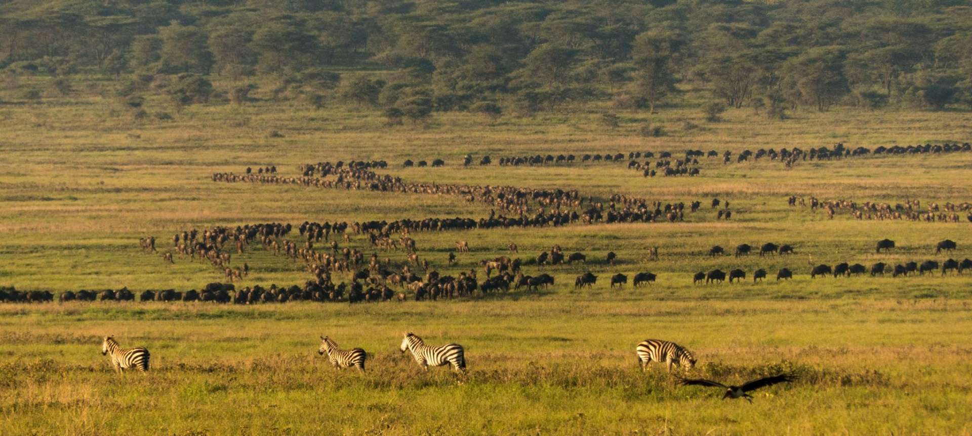 The Serengeti is regarded as the greatest game reserve on the planet