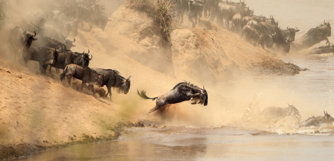 The Great Wildebeest Migration occurs in both Tanzania and Kenya