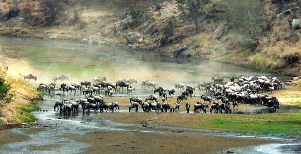 tarangire great wildebeest migration safari