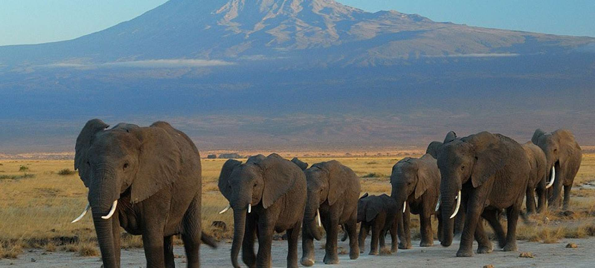 A herd of elephant in Arusha National Park