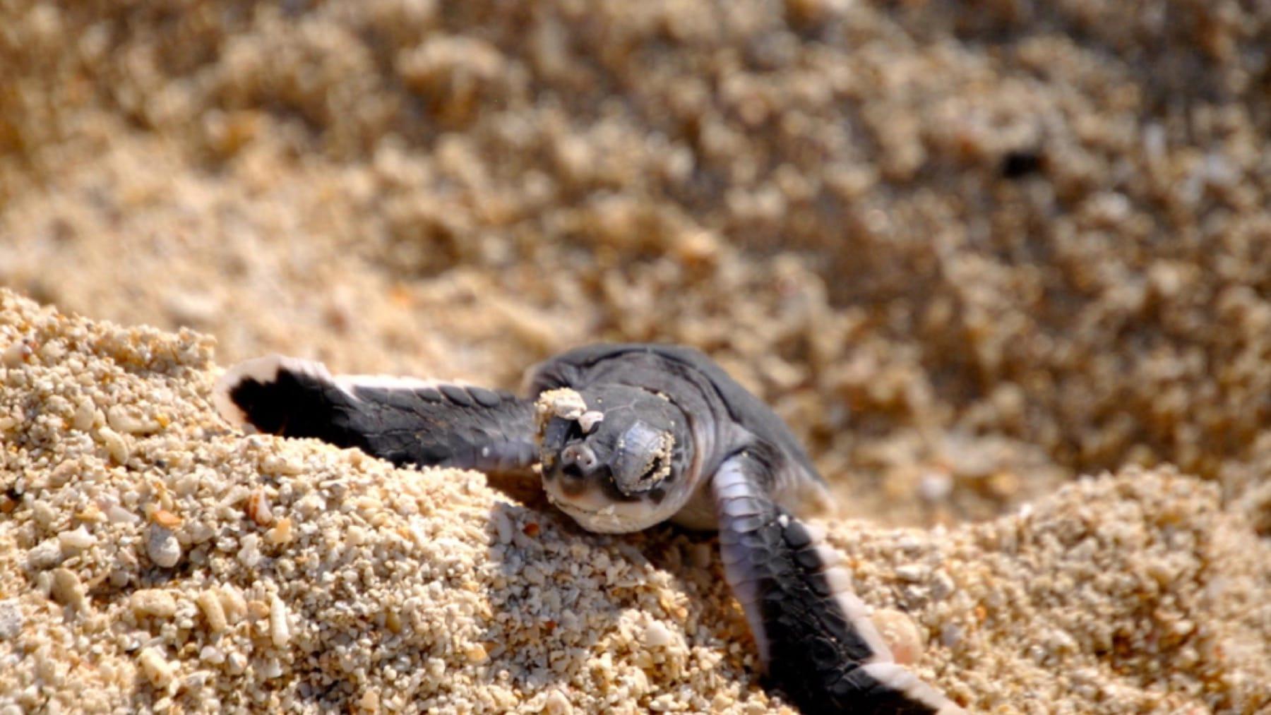 turtle marine life mozambique
