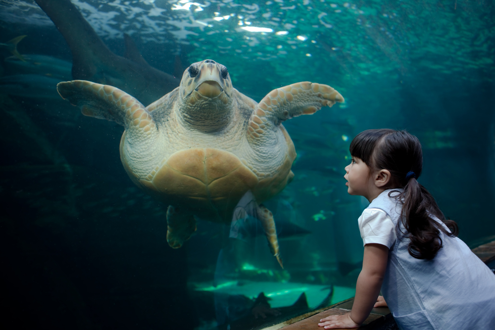 The Two Oceans Aquarium is a beautiful example of marine life from the Atlantic ocean and beyond  Credit: Essentials
