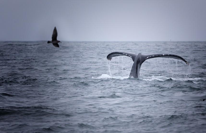 whales skeleton coast