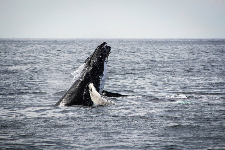 South Africa in July_Whale Watching