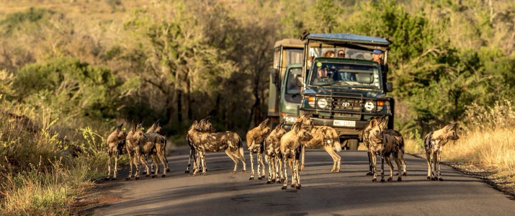 KwaZulu-Natal_Hluhluwe-Imfolozi Game Reserve