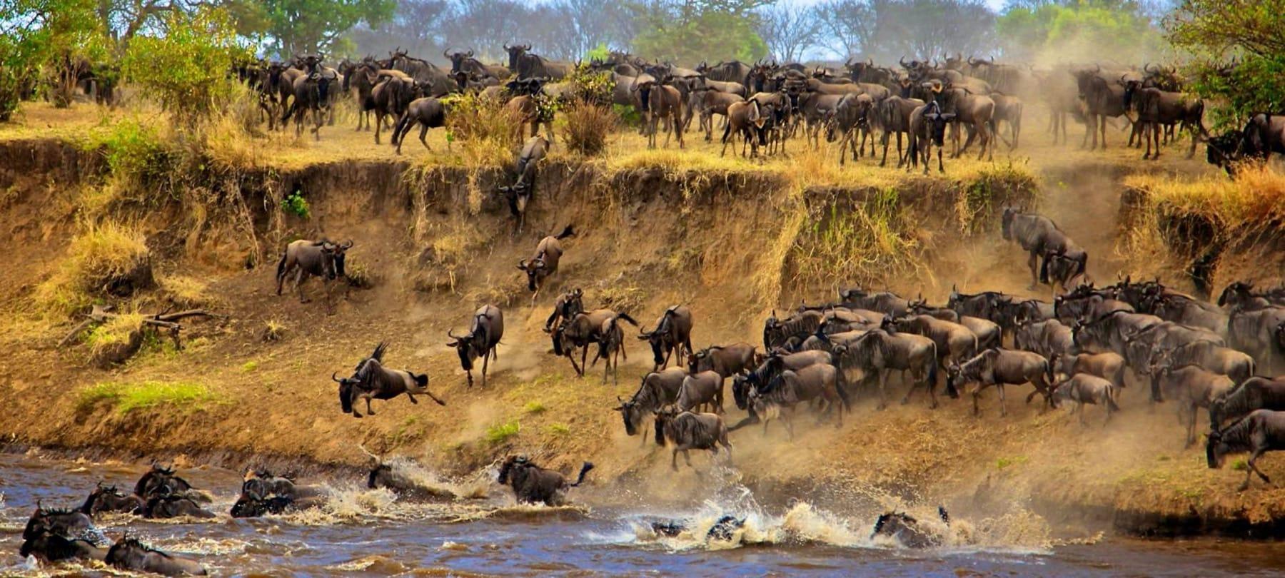 Great Migration_Masai Mara_Kenya